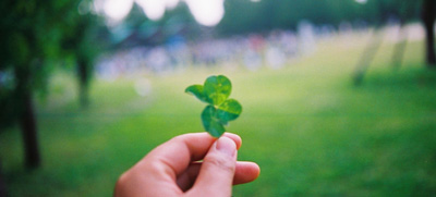 Clover leaf from a clover lawn